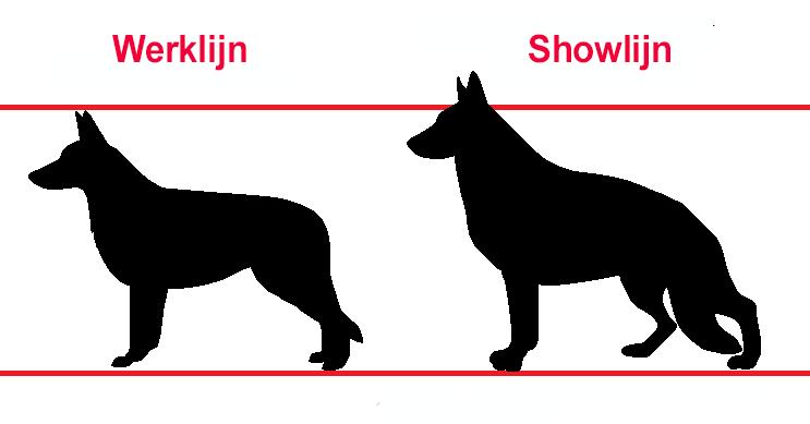 verschil werklijn en showlijn Duitse Herder